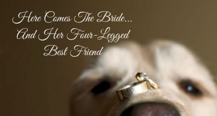 Here Comes the Bride...And Her Four-Legged Best Friend!